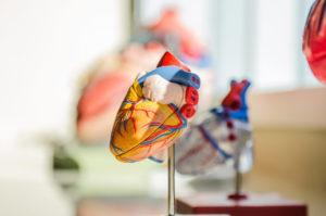 Herz Nervensystem DEET schädigt
