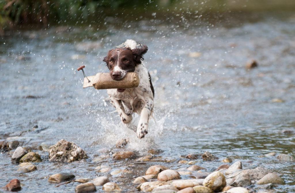 Hund Wasser Fipronil