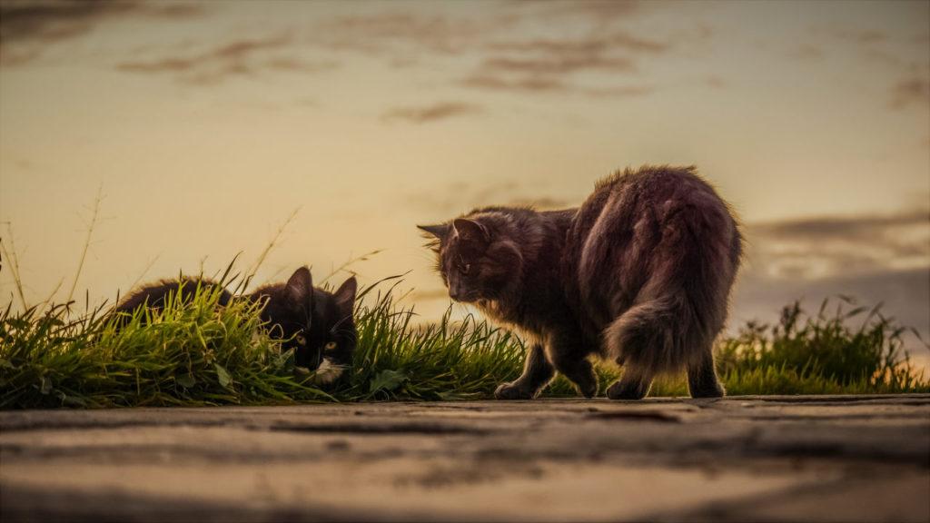 Katzen nie Permethrin Todesgefahr