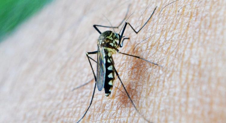 Malaria Moskito DEET gegen Zecken Insektenabwehr