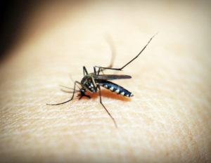 Mosquito Malaria Gefahr