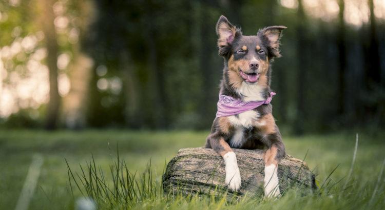 Zeckenschutz Hund Fipronil