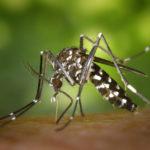 Icaridin gegen Zecken, Mücken, etc. | Insektenabwehr