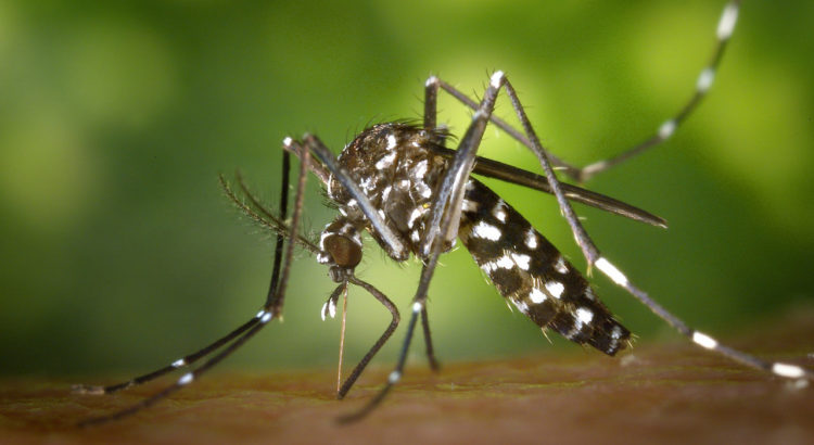 tiger-mosquito icaridin