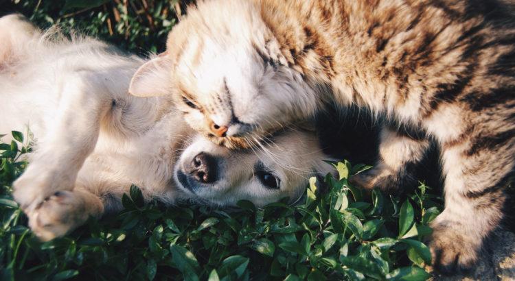 Hund und Katze Kokosöl
