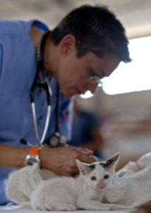 Katze Schwarzkümmelöl Tierarzt