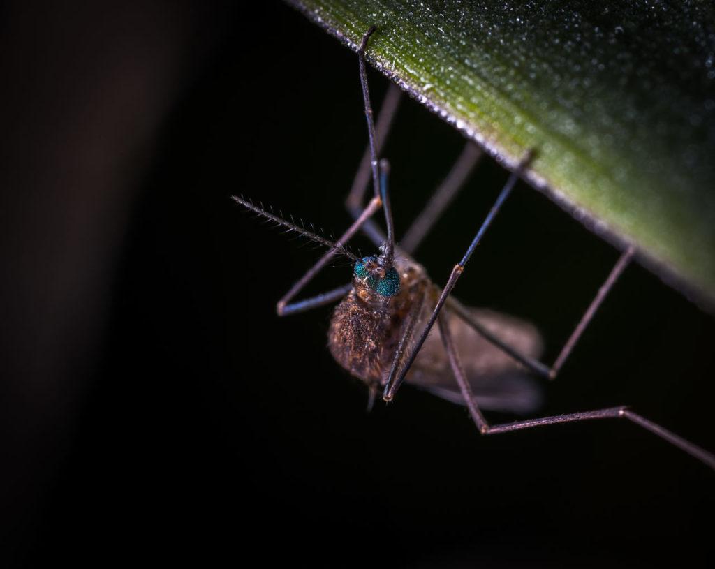 Mücke Zitroneneukalyptusöl Abwehr Mückenschutz Mittel