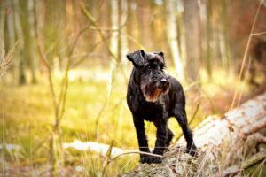 Hund im Wald
