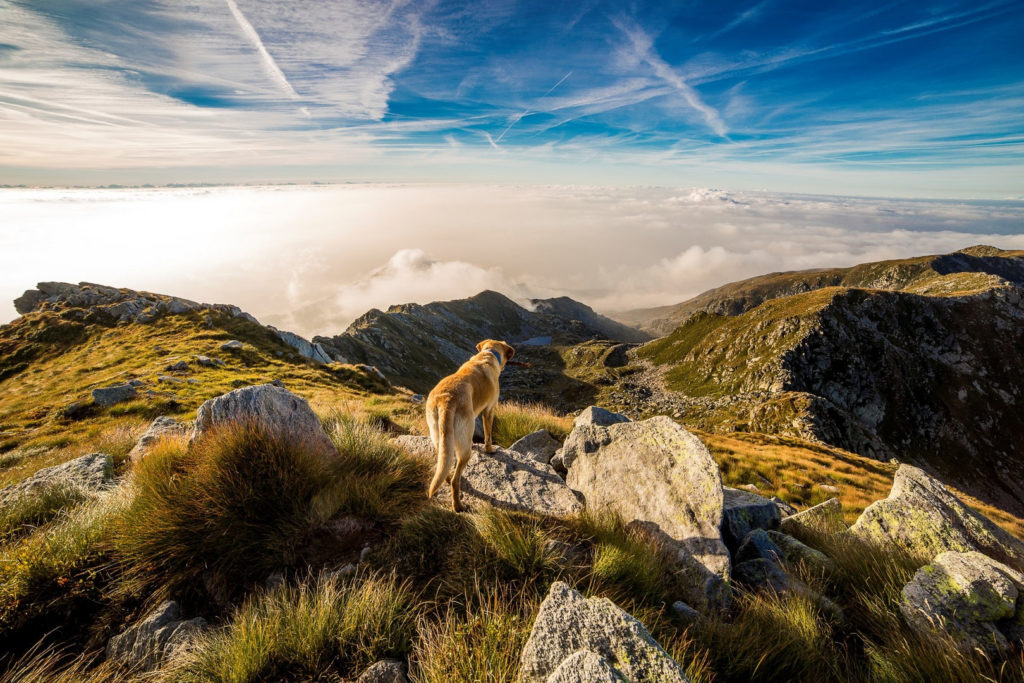 Hund in den Bergen