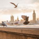 Taubenzecken: Was tun? | Merkmale, Vorkommen & Gegenmittel | Tipps & Tricks