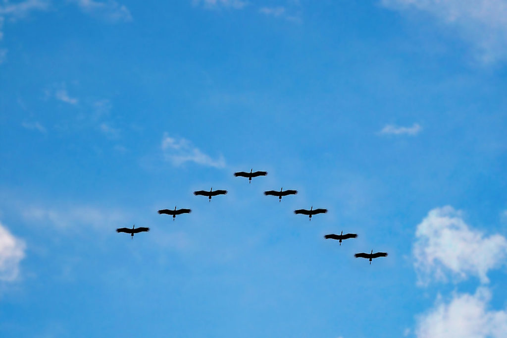 Zugvögel verbreiten Zecken Hyalomma