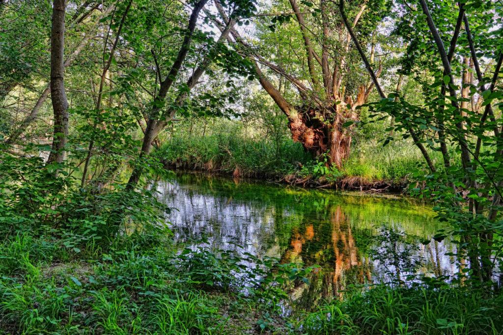 Auenwald Zeckengebiet