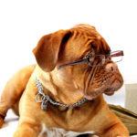 Braune Hundezecke: Vorkommen, Krankheiten & Vorbeugung | Tipps & Tricks