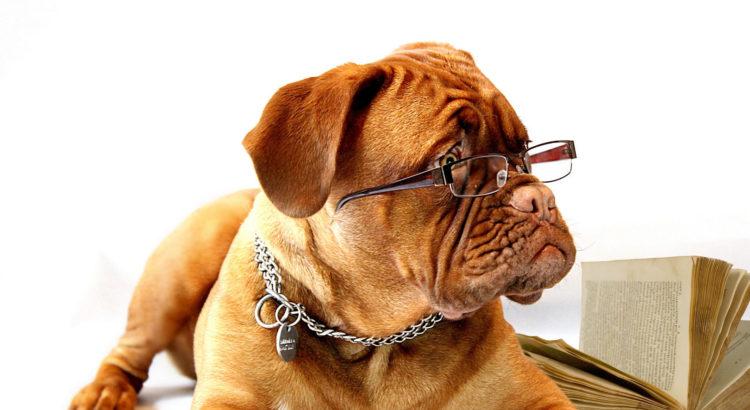 Hund Braune Hundezecke