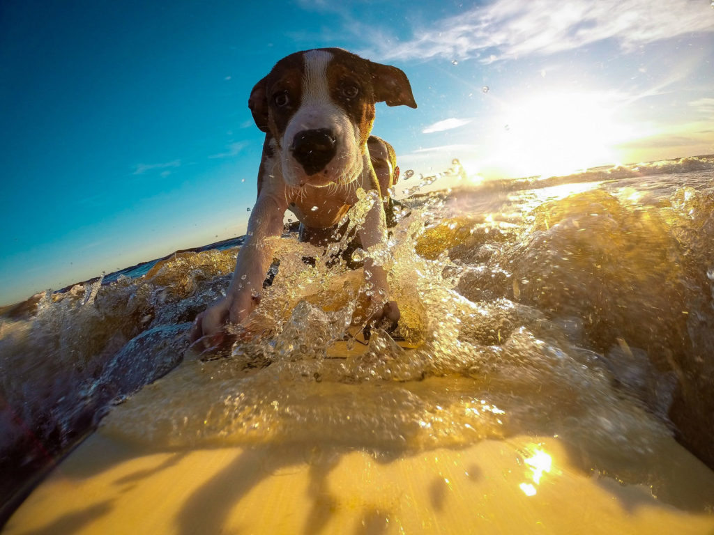 Hund Urlaub Meer
