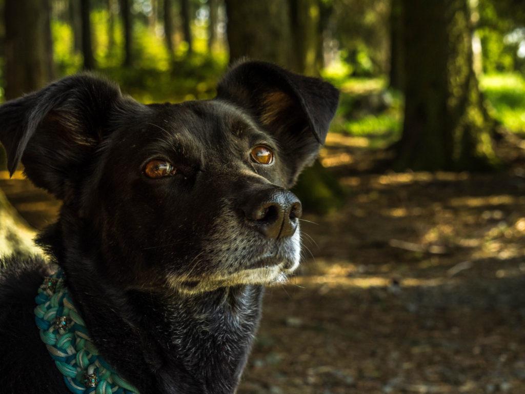 Hund Zecke Wald Gefahr