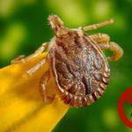 Nutzen von Zecken, Mücken & Milben für Mensch und Natur | Aufgaben von Parasiten im Ökosystem
