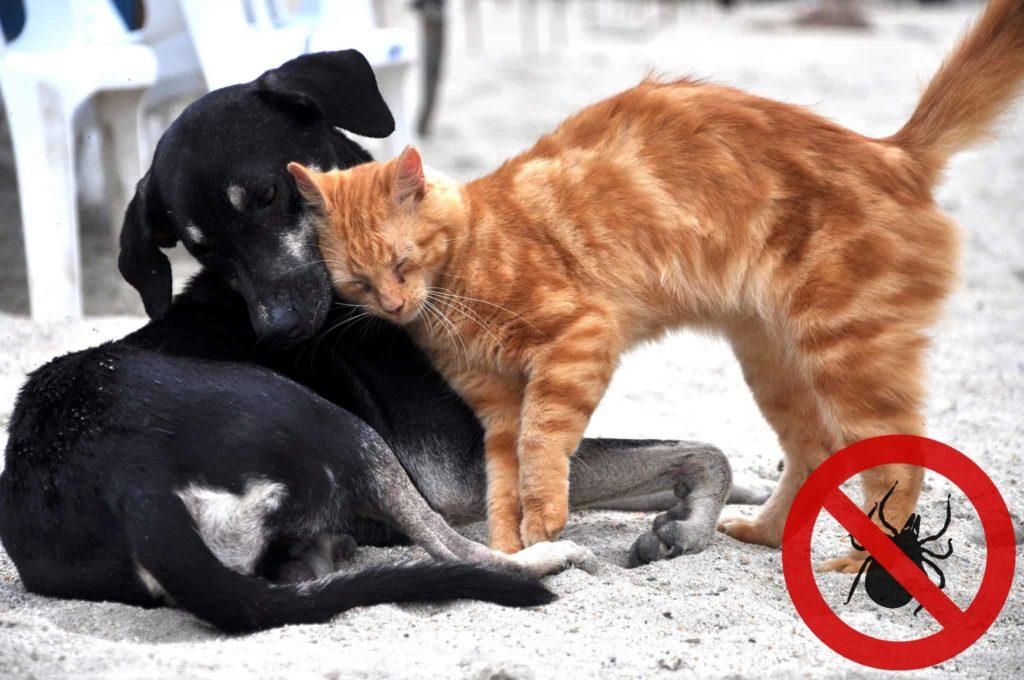 Hund und Katze Zeckenschutz