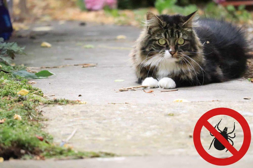 Katze Zecke entfernen