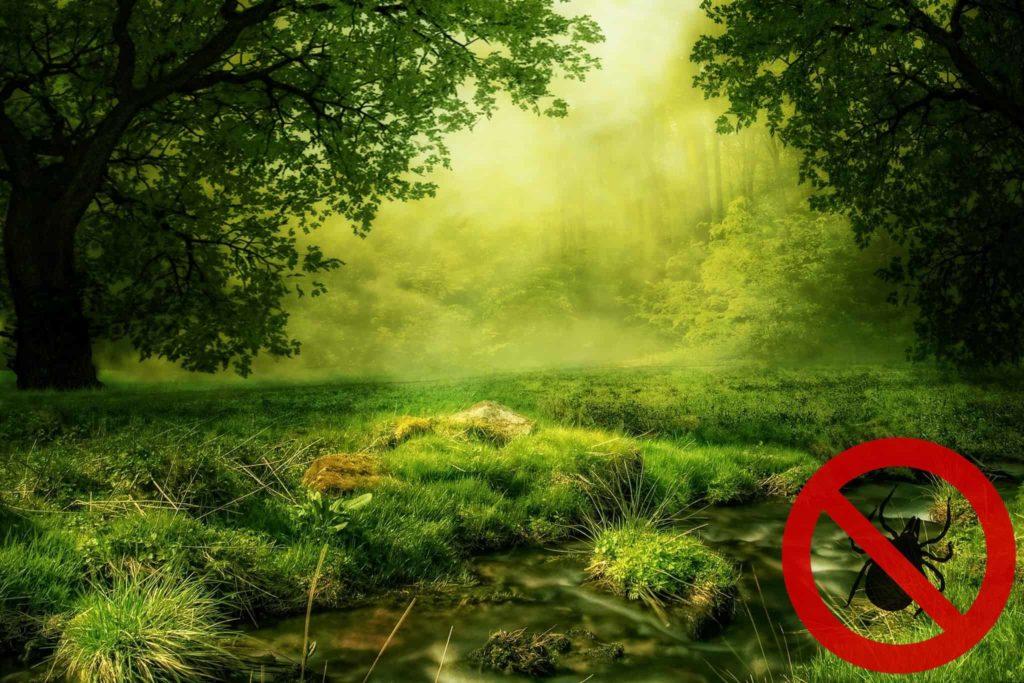Waldlichtung Zeckengebiet