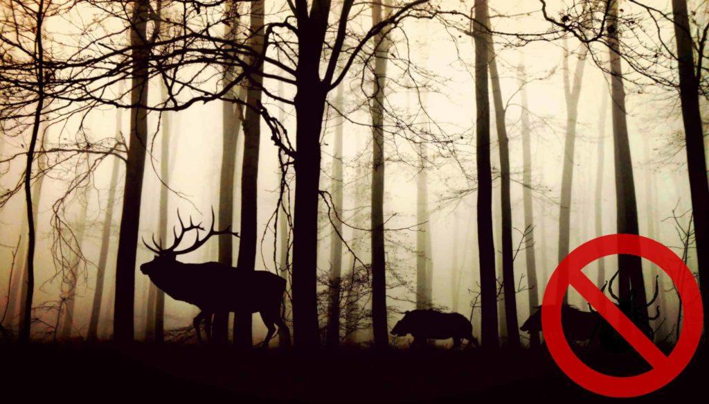 Wildtiere Lebensgrundlage für Zecken