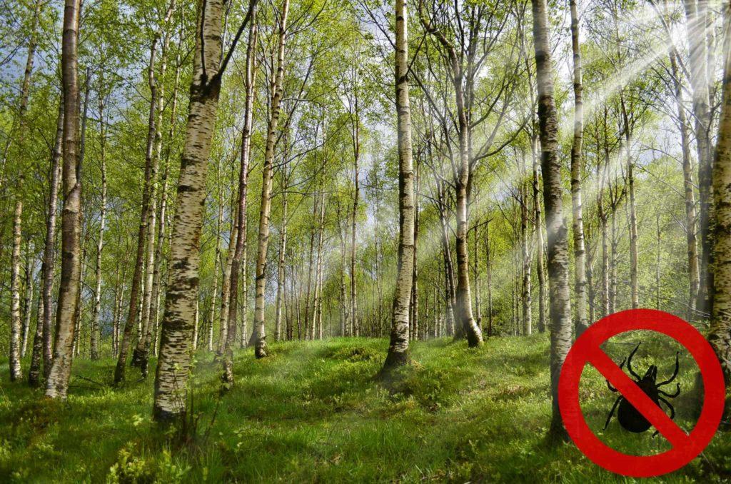 Zeckengebiet im Wald
