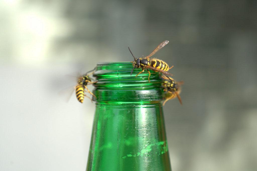 Hier sieht man eine typische Wespenfalle.
