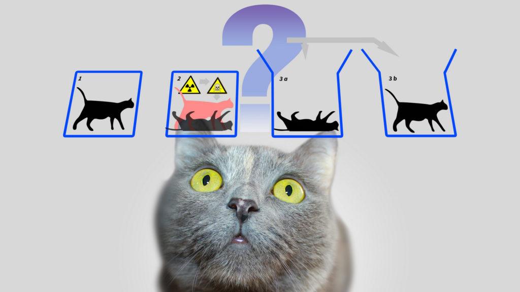 Katze Experiment Schödinger
