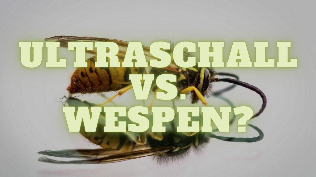 Ultraschall gegen Wespen?