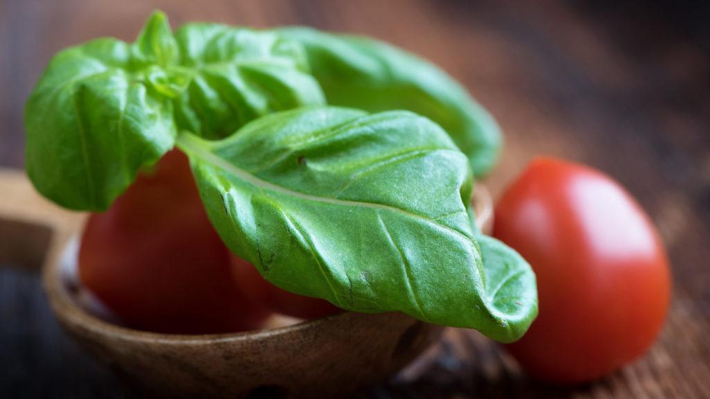 Tomate Basilikum Wespen