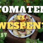 Tomaten gegen Wespen im Test | Vertreiben Tomaten Wespen?