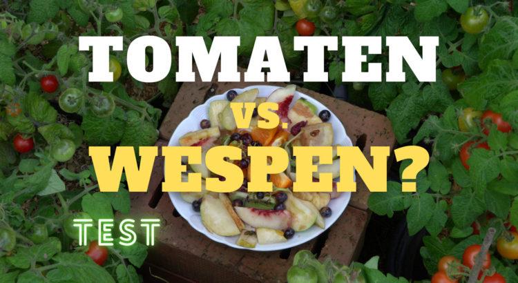 Tomaten gegen Wespen