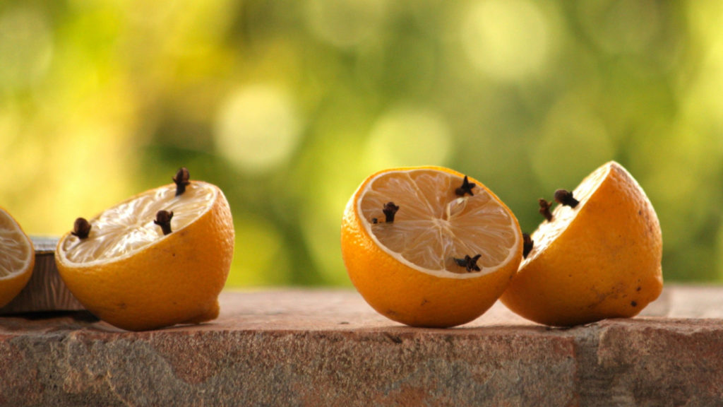 Zitronen gespickt mit Gewürznelken gegen Insekten