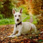 Zeckenschutz für Hunde: Mit biologischen Wirkstoffen? | Mittelübersicht