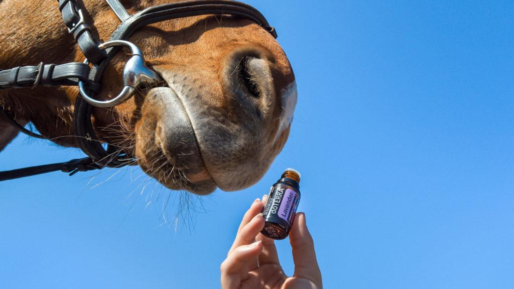 Biologische Mittel gegen Zecken beim Pferd