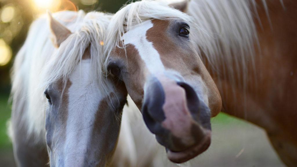 Pferde Zeckenschutz